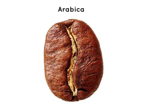 Grain de café arabica
